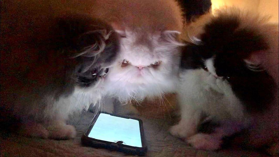 hunting cockroaches #cat #cats #Persiancatstagram#catsagram #catstagram #instagood #kitten #kitty...
