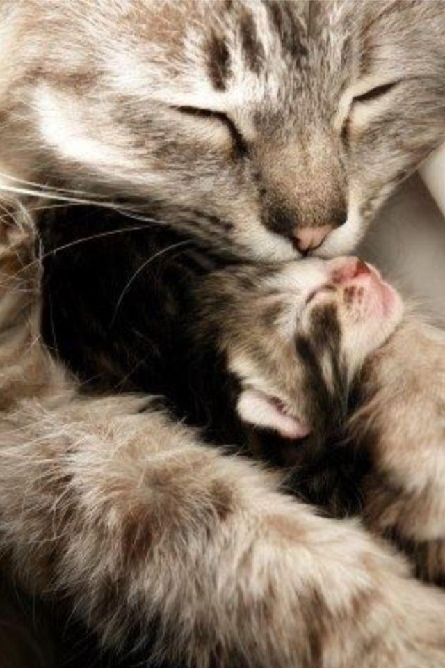 Cute Cats Image By Susan Weston On Sunshine Nala Cute Animals Kittens Cutest