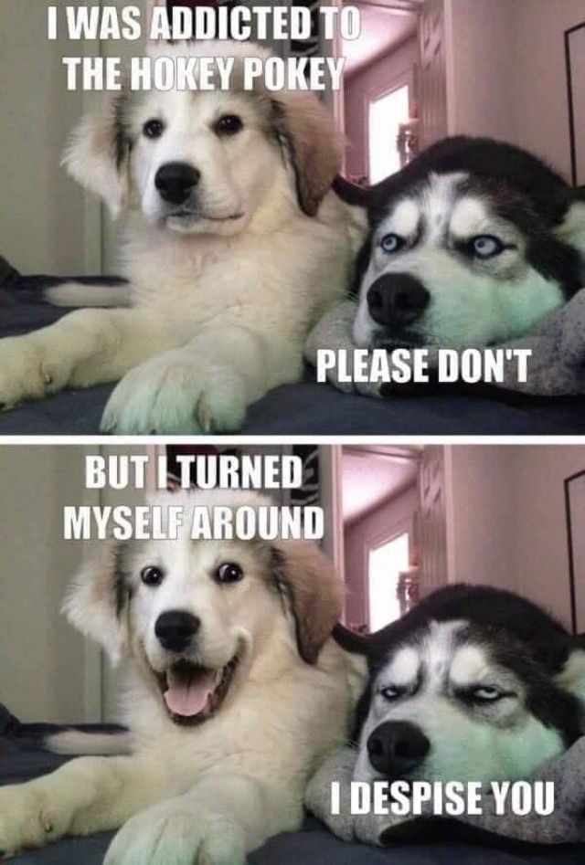 Pin By Colleen Pinger On Hilarious Funny Dog Jokes Funny Dog Memes Cute Funny Dogs