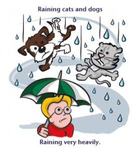Weather Idioms And Their Origins Idioms Raining Cats And Dogs