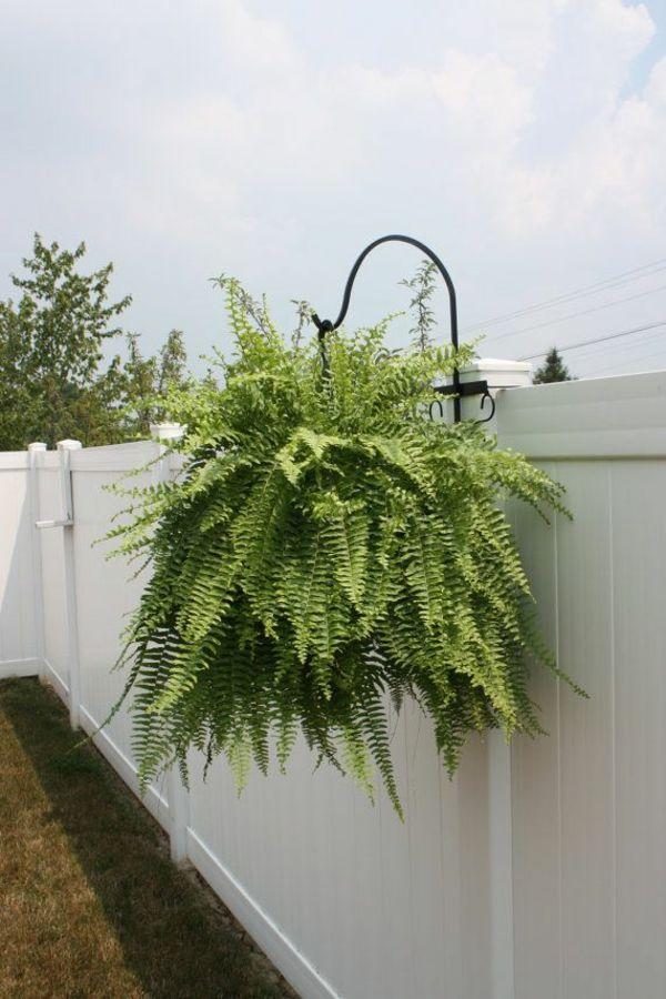 Immergrune Gartenpflanzen Straucher Und Hecke Fur Frische