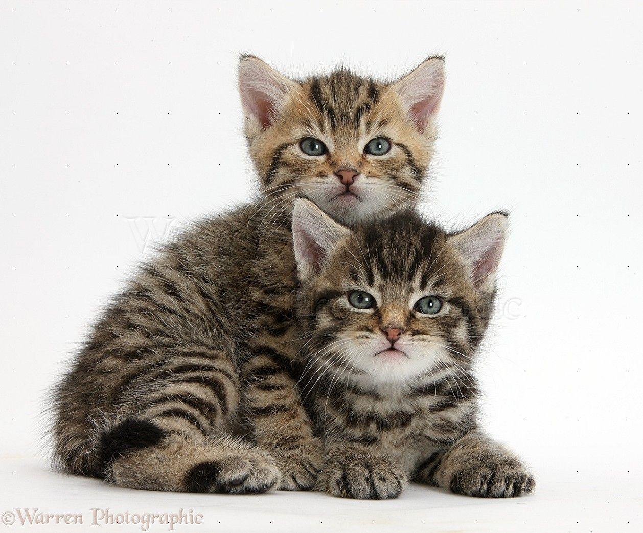 Kittens Yahoo Image Search Results Kittens Pinterest