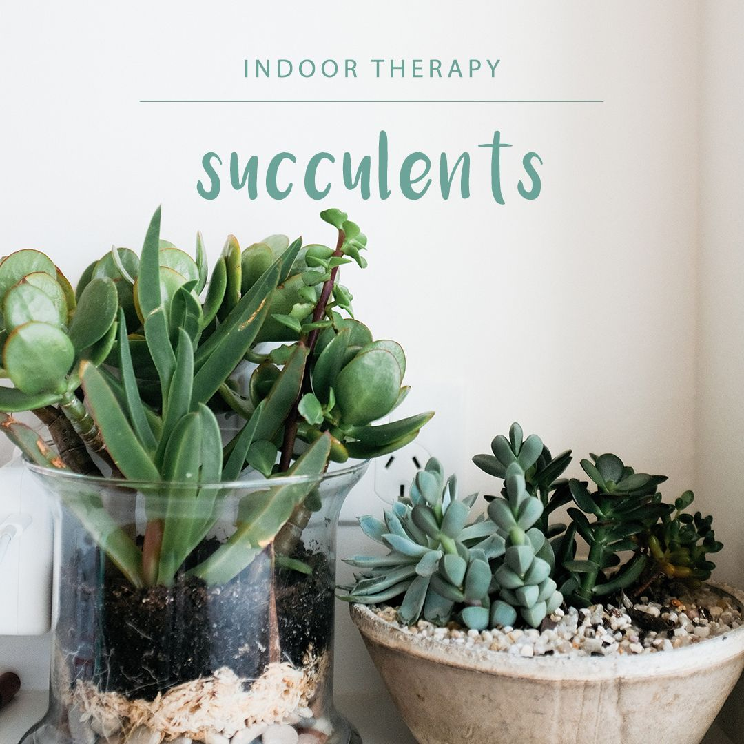 Caring For Succulents Have Never Been Easier Succulents Need Even Less Care In Winter Be Careful Not To Over Water Them Garden Center Winter Plants Garden
