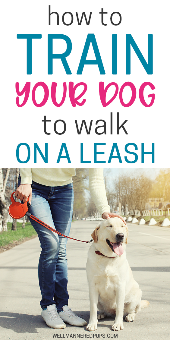 Leash Training For Dog Moms A Course To Teach You How To Train