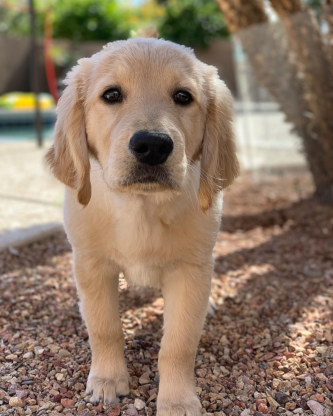 Watch The Best Youtube Videos Online Happy National Puppy Day To