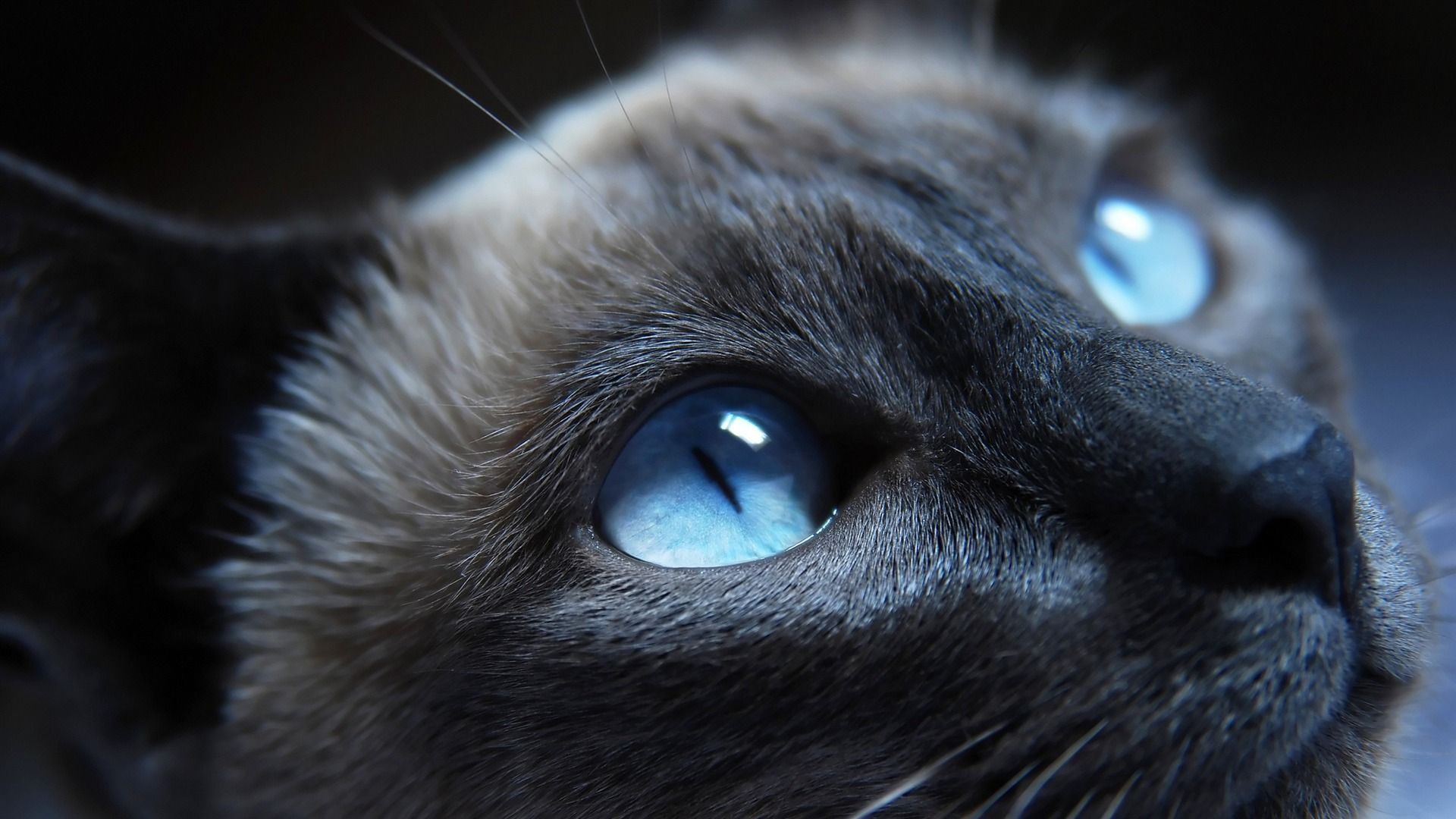 Black Cat With Blue Eyes 01 Cute Little Kitty Cat Living Wallpaper 1920x1080 Wallpaper Download Cat With Blue Eyes Pretty Cats Beautiful Cats