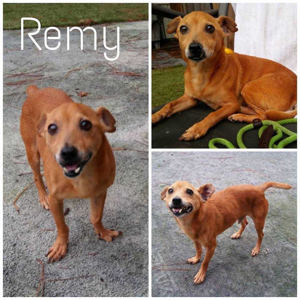 Adopt Remy on Paws rescue, Save a dog, Pet adoption