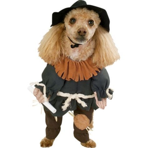 Wizard Of Oz Scarecrow Dog Costume Party City Pet Halloween