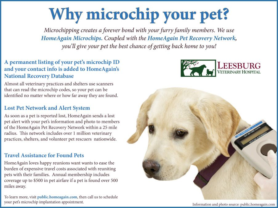 The Importance of Pet Microchipping Pet id, Pets, Losing