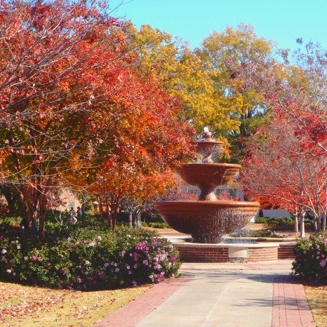b8e8bc656ed878b2748cc97df1c1e24f - Shrek The Halls Auburn Botanic Gardens