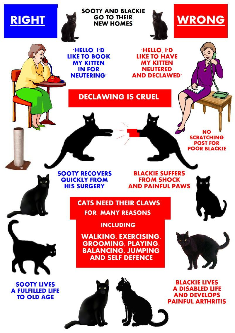Declawing Kittens Is 100 Wrong Cat Care Kittens Animal Advocacy