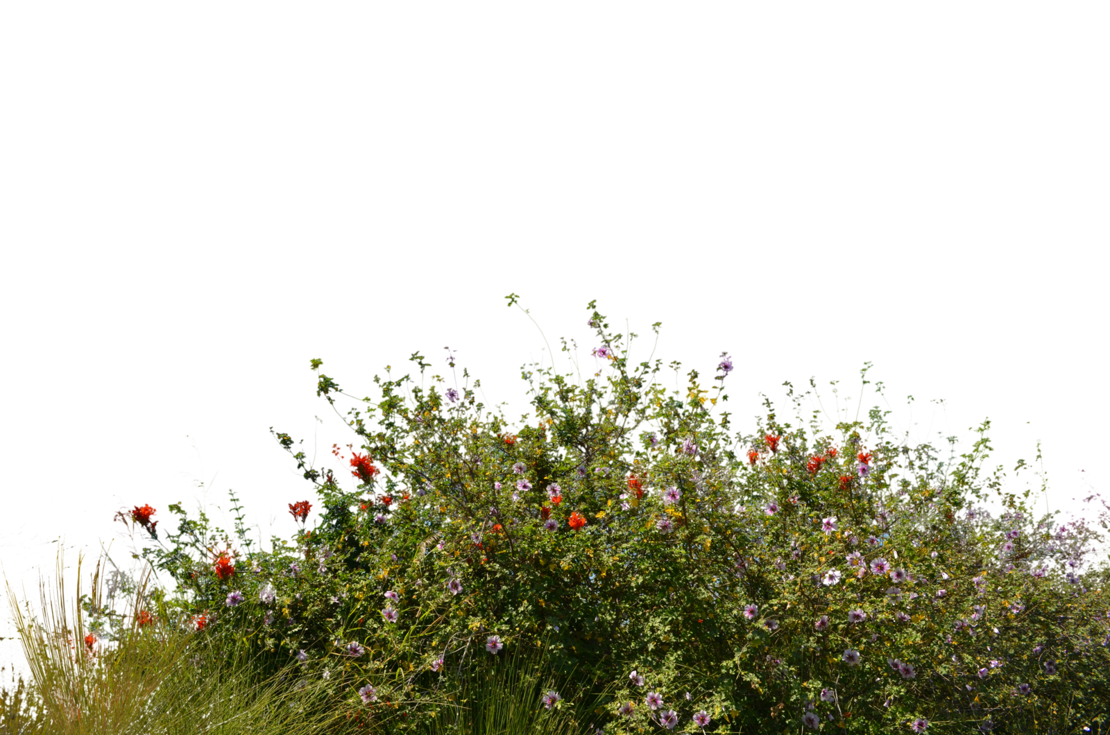 Wild Flowers With Grass 2 Stock Photo 0081PNG by