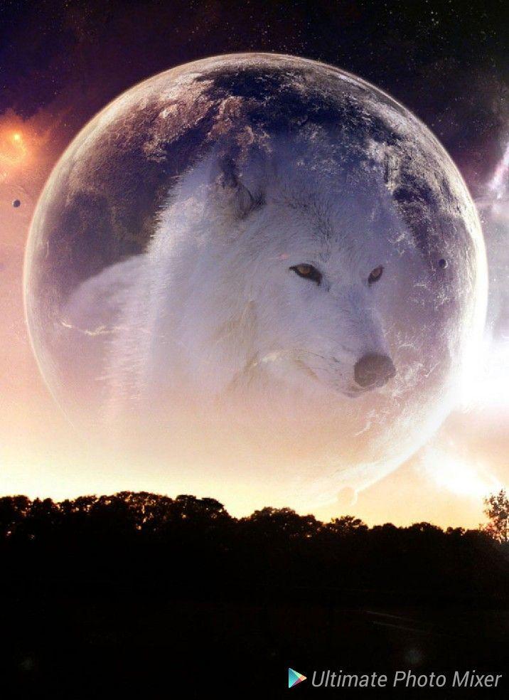 wolf im mond  landschaft mond wolf