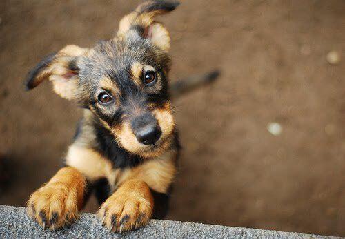 Descubre en Mis Animales, tu blog amigo de mascotas, por qué tu perro te mira fijamente y que puede estar pensando en ese mismo momento