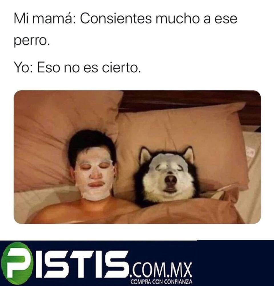 Perro Consentido Chistes Graciosos Memes Chistes Buenos