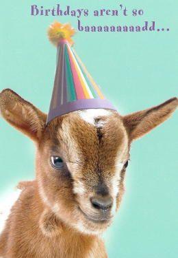 Goat Birthday Happy Birthday Goat Birthday Meme Happy Birthday Funny