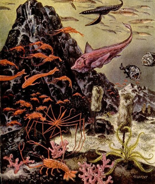 Miracle of the Sea (1953 Sea Life Illustrations by James Lewicki)