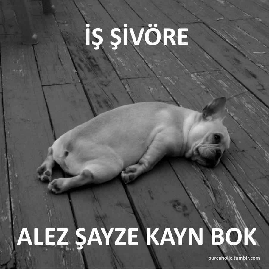 türkische weise sprüche