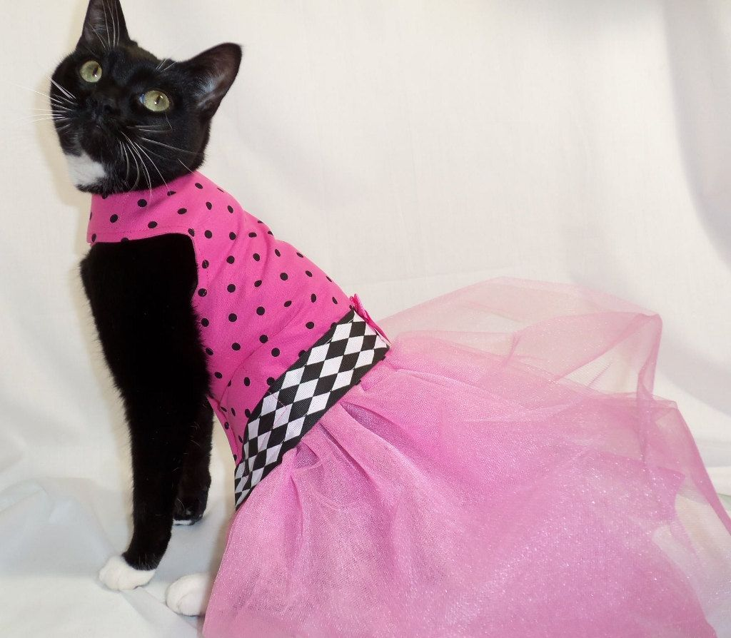 Just For Cats Coolcats Pink And Black Polkadot Couture Tutu Dress For Cat Formal Wear Cat Dresses Easter Pets Cat Fashion