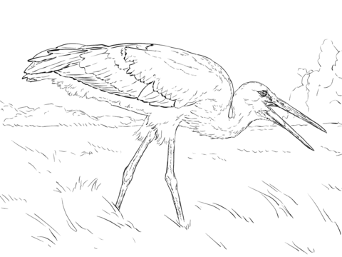 Realistic White Stork Coloring Page Free Printable Coloring Pages Owl Coloring Pages Coloring Pages Bird Coloring Pages