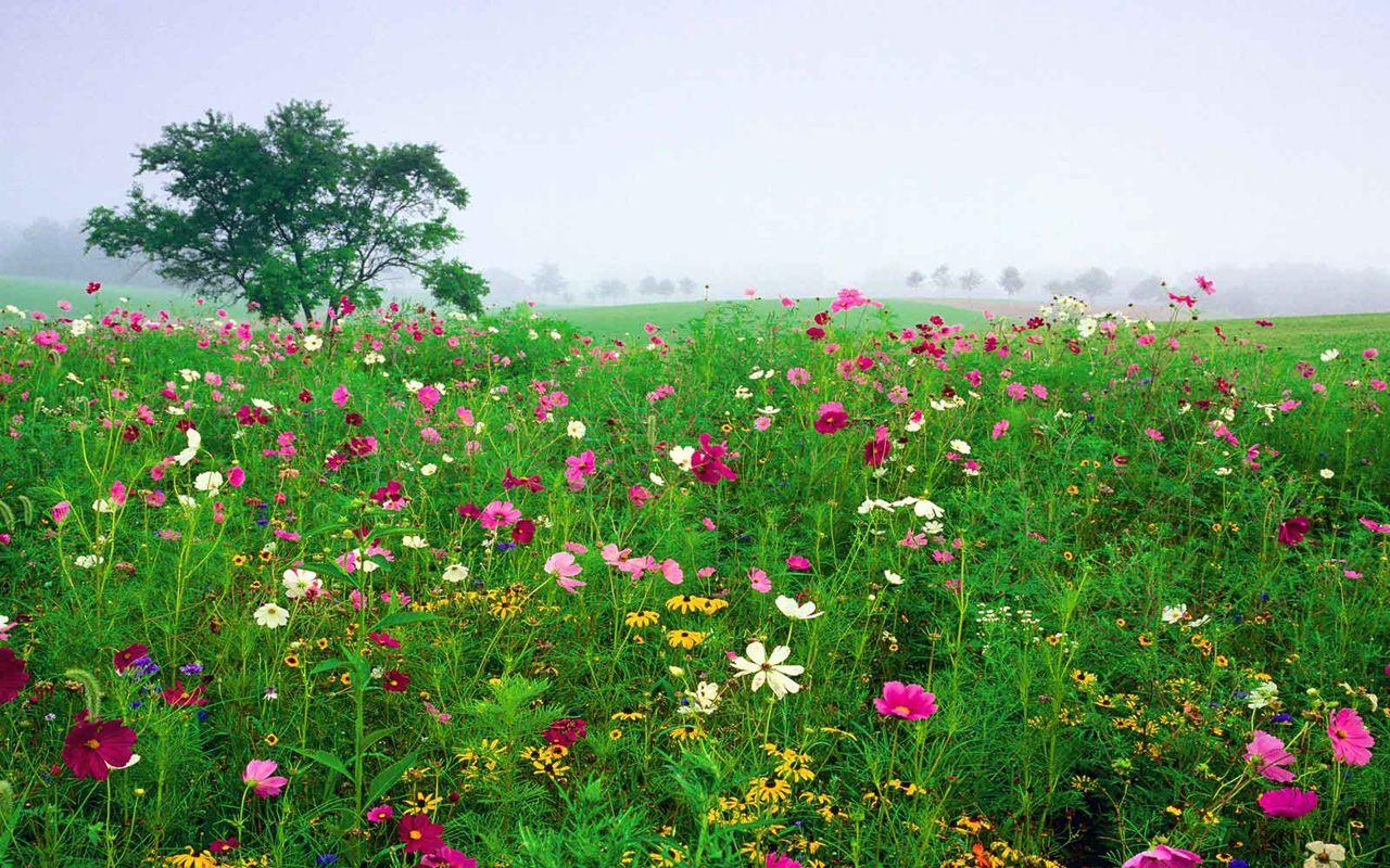 Field of Flowers Background | wallpaper free wallpaper ...