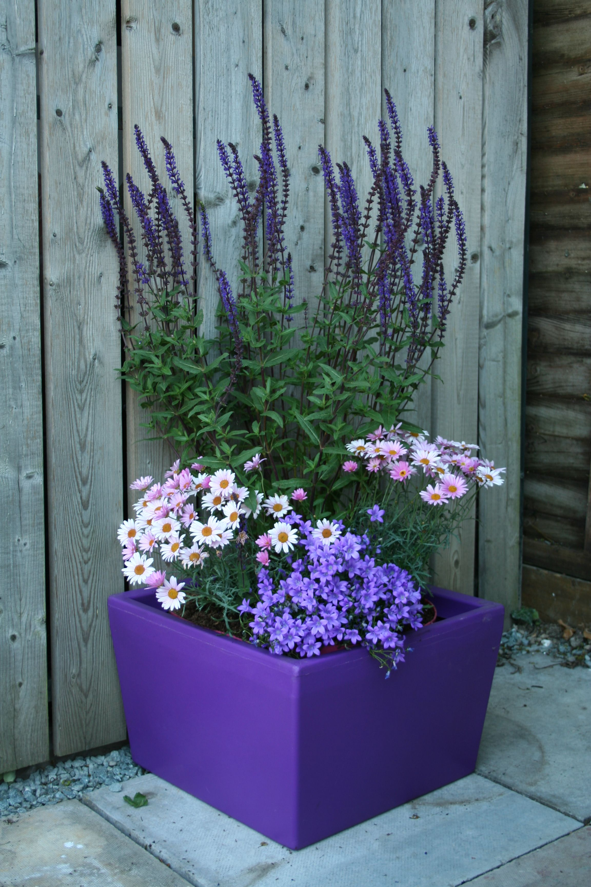Large garden planter in purple