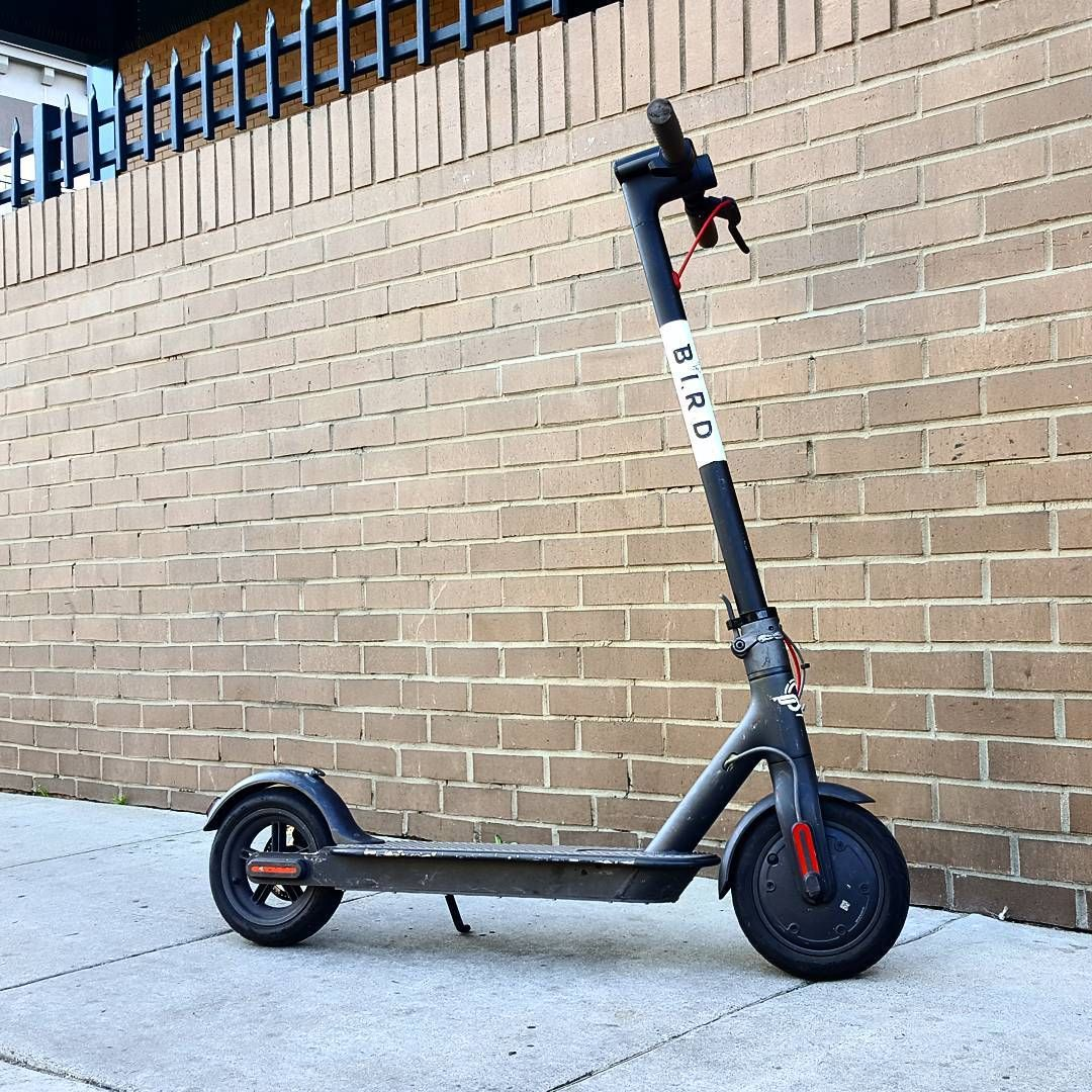 Bird Electric Scooter Scooter Share Service Could be the best way to