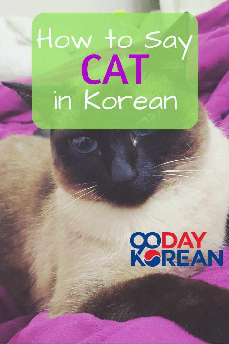 How to say cat in korean learnkorean studykorean