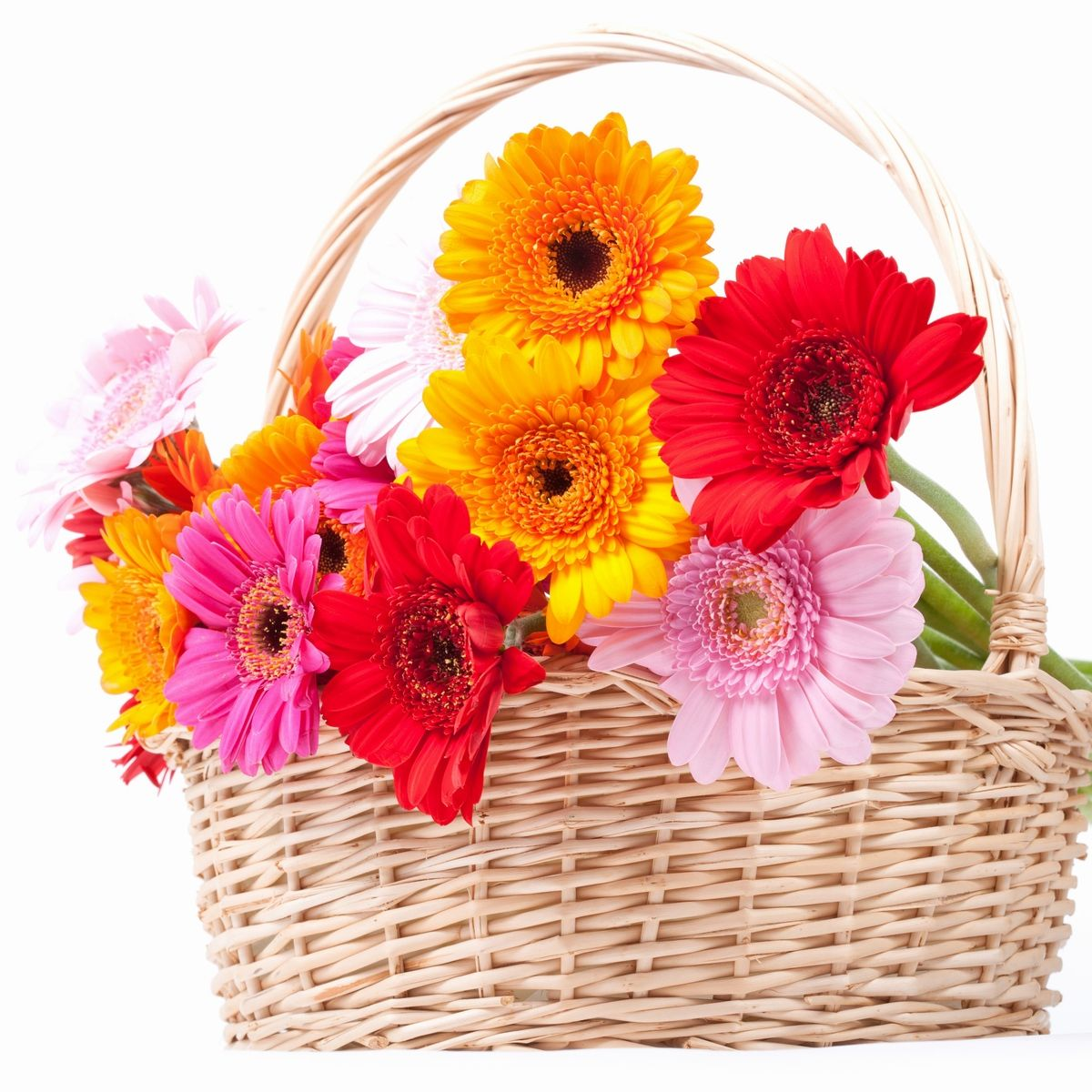 httpniceflowerdeliveryhatenablogcom Lovely yet cheap flowers