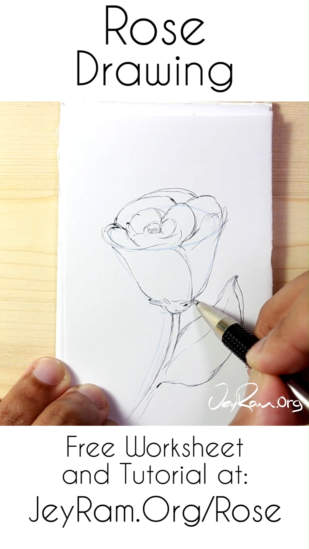 Learn How To Draw Roses Tutorial Amp Printable Worksheet