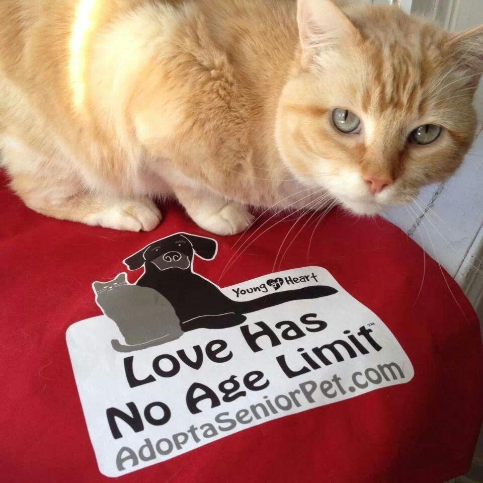 Palatine Il Cat Adoption Animal Advocacy Animal Rescue