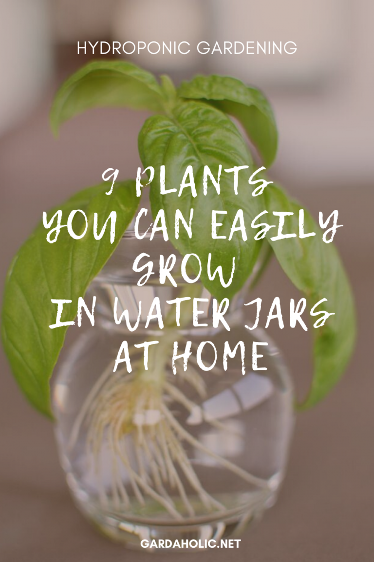 Hydroponic Gardening: 9 Plants You Can Easily Grow In Water Jars At Home