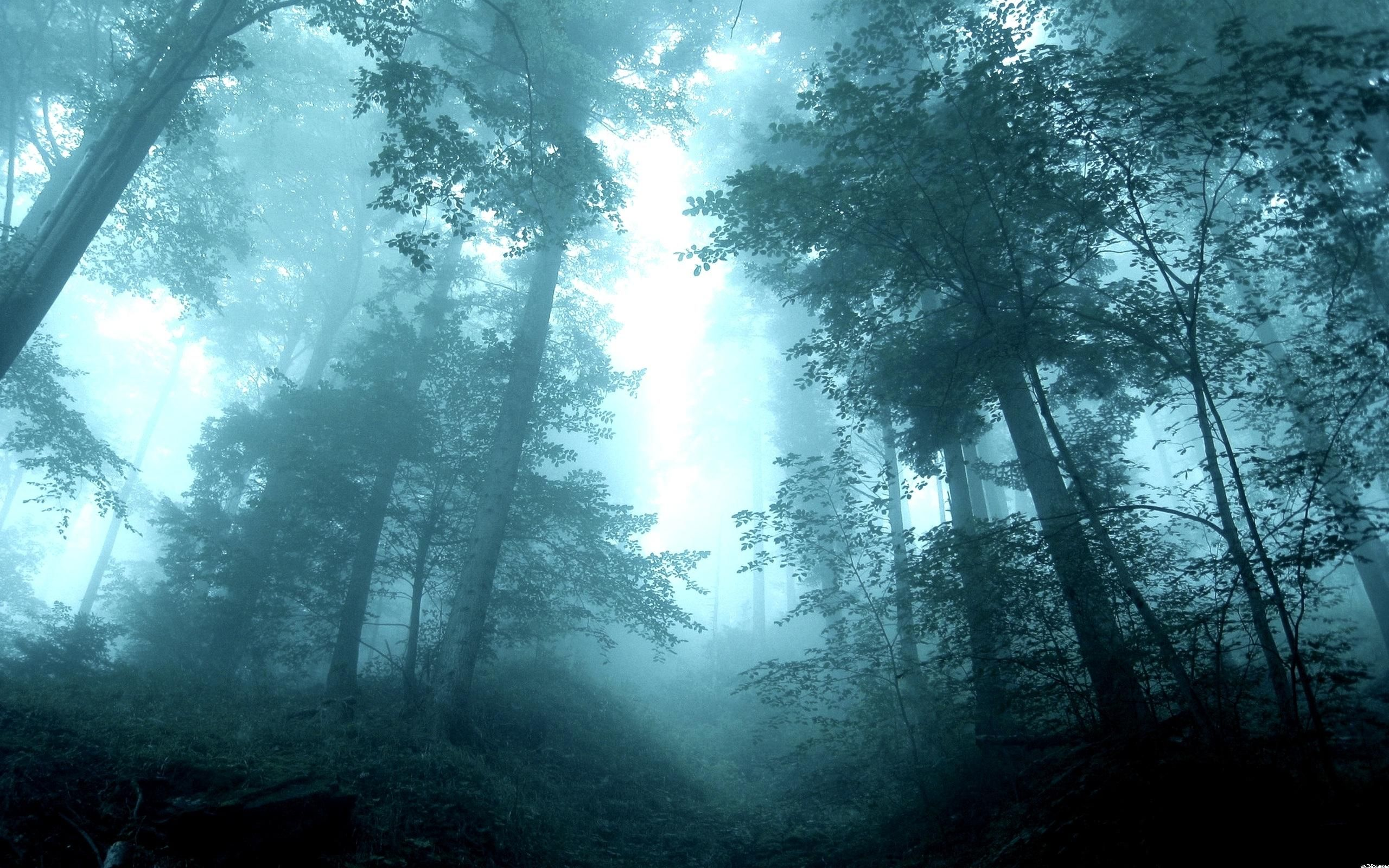 Wallpapers Into The Mist Hd In Forest 2560x1600 653071