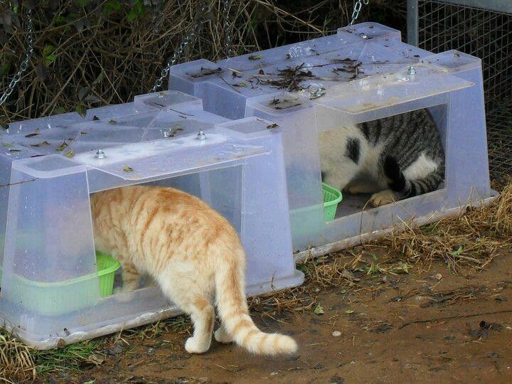 Best Quality Cat Enclosures And Cat Tunnels Ideas 41 Feral Cat Shelter Outdoor Cat Shelter Feral Cat House
