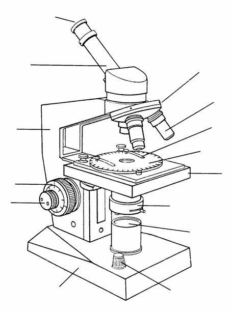 Microscopio Para Colorear Tumicroscopio Para Pintar Microscopio Optico Imagenes De Microscopio Microscopio