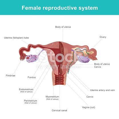 Pics of women clitoris