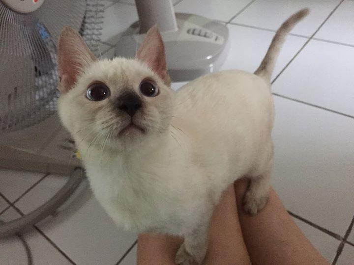 สอนแมวน งช กโครกใน 1 เด อน ง ายกว าท ค ด ไม เปล องเง นซ อทรายแมวอ กต อไป Youtube ส ตว เล ยง