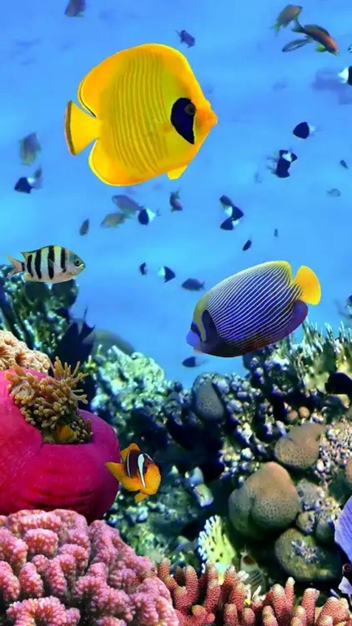 Under the Sea image by Ruby Malebranche Aquarium live