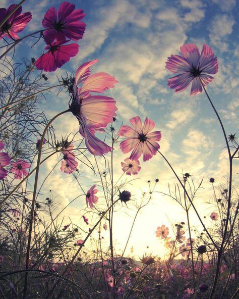 Super Photography Nature Flowers Sun 45+ Ideas