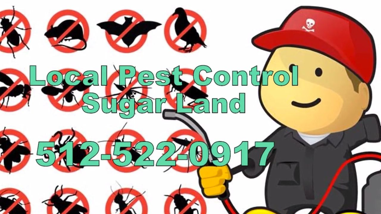 24 hour pest control sugar land tx termite inspection