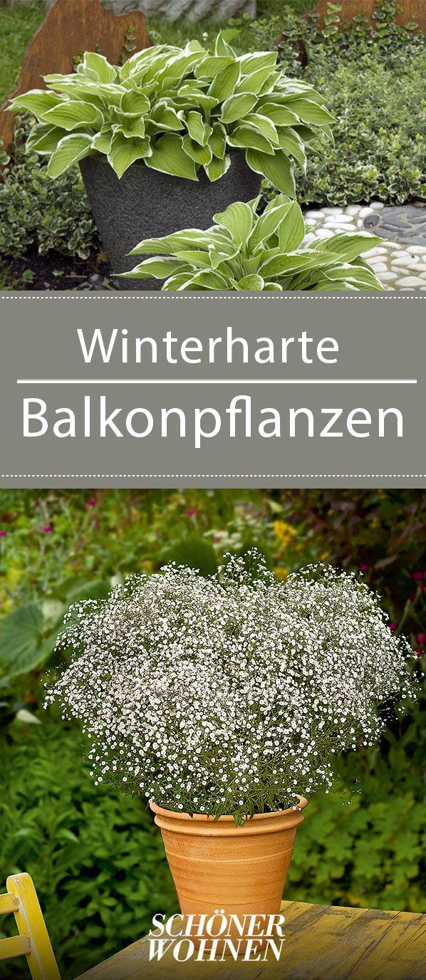 Winterharte balkonpflanzen bilder for Kubelpflanzen uberwintern
