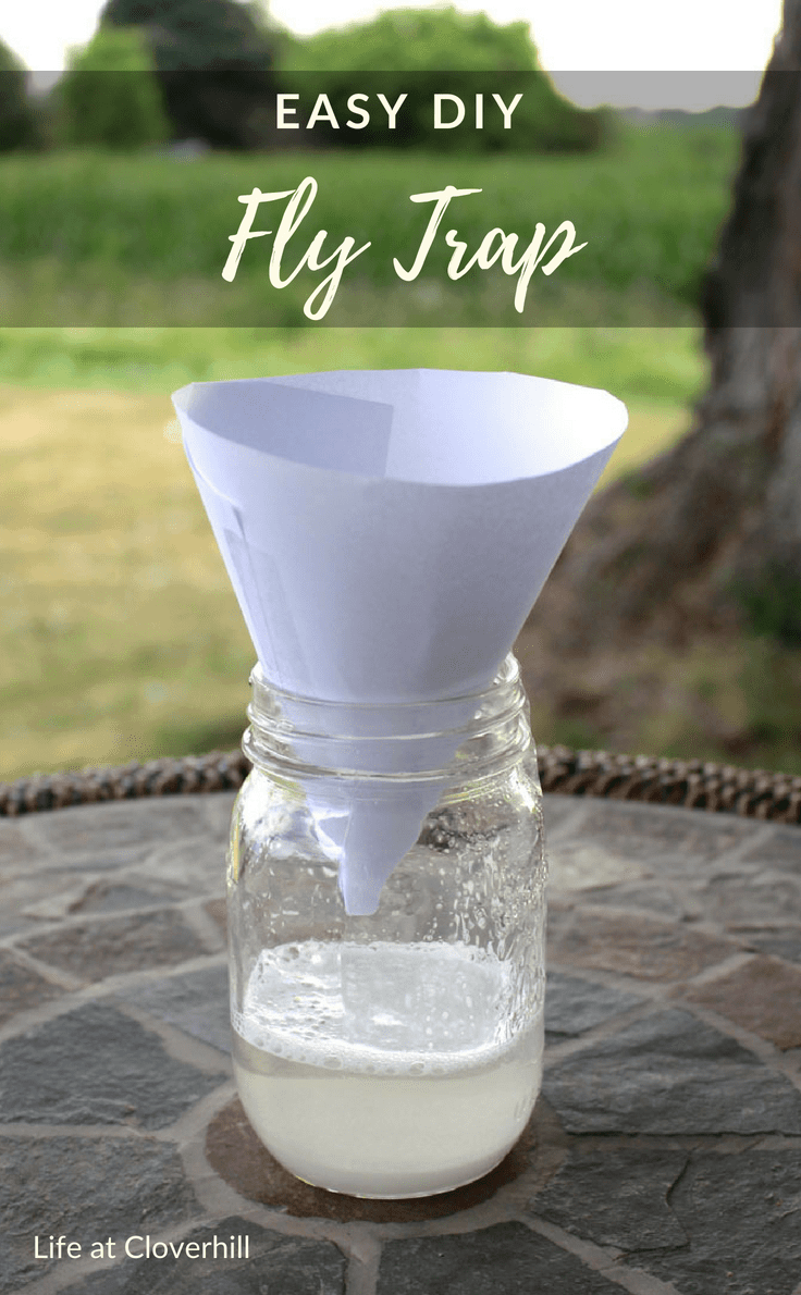 Easy DIY Fly Trap Fly traps, Homemade fly traps, Easy diy