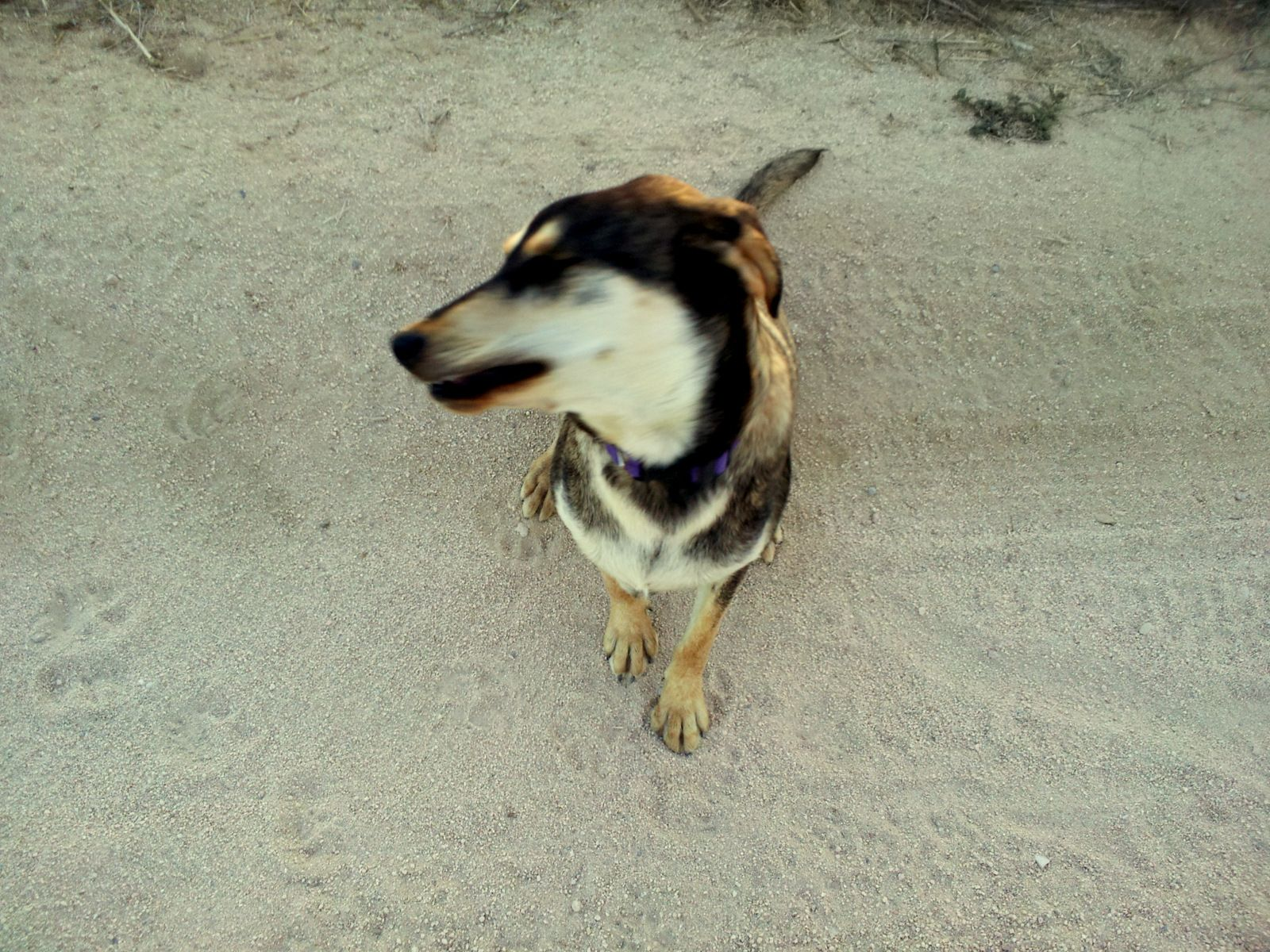 Wonderful goofy dog in Las Tinas The Dogs of Baja Dogs