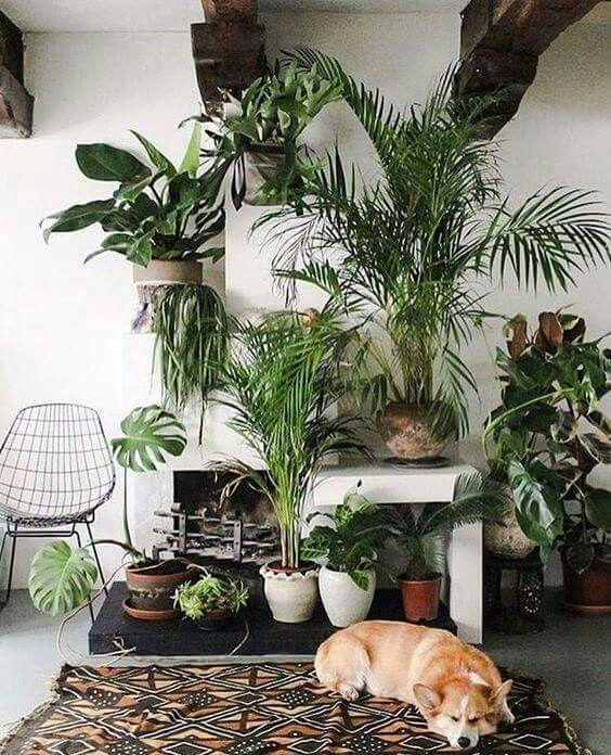 pin von stilettos sprouts food blogger auf plants