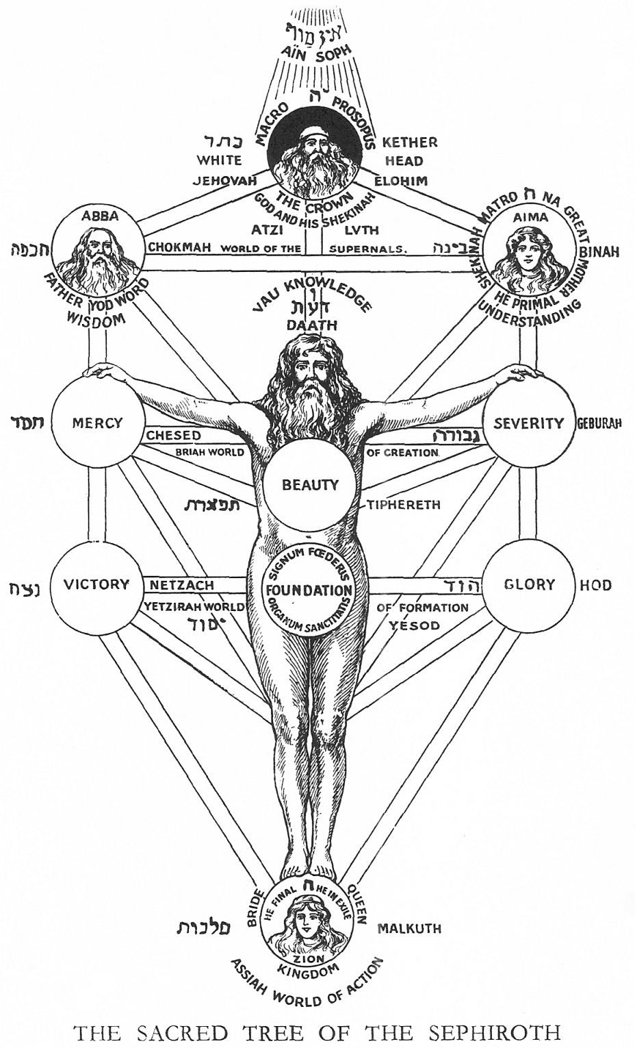 The Sacred Tree Of The Sephiroth Tree Of Life Occult Sacred Tree It is the structure of the 10 sefirot (or sephirot), arranged in 3 pillars. the sacred tree of the sephiroth