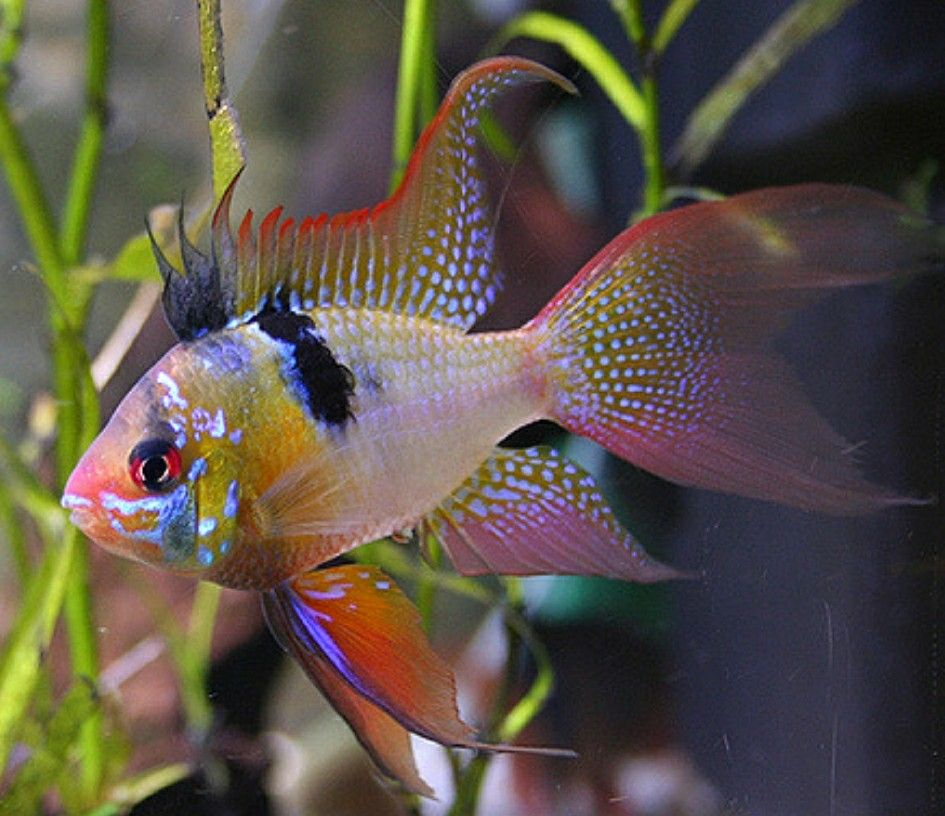 colourful and sparkling. Tropical fish tanks, Tropical