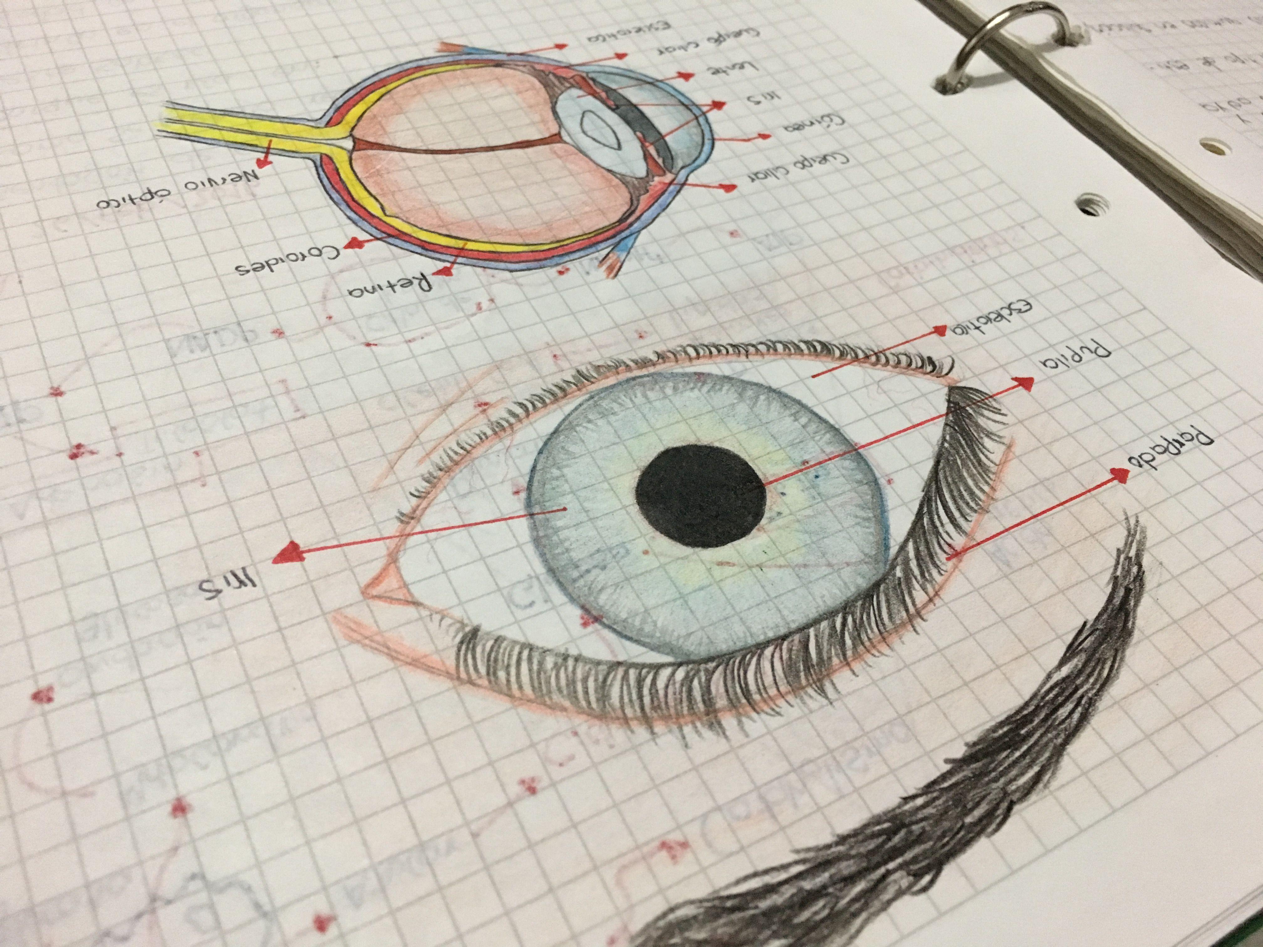 Ojo humano 👁 | Anatomy | Pinterest | Ojo humano y Ojos