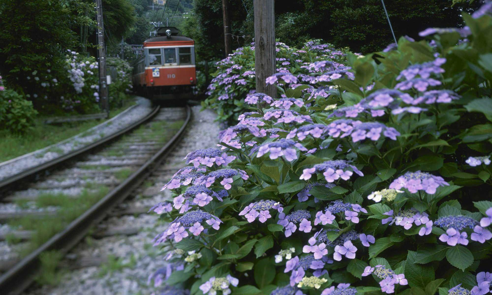 summer flower / JapanGov - The Government of Japan -