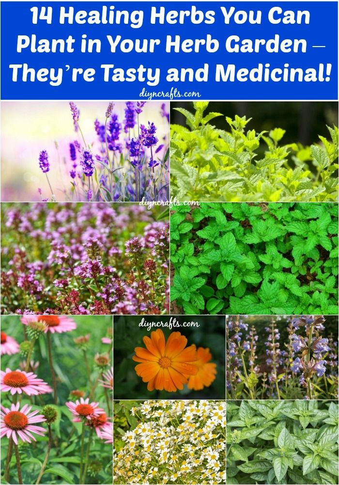 14 Healing Herbs to Plant in Your Herb Garden   They're Tasty and Medicinal! is part of Herb garden Containers - If you're planning on starting your own herb garden but aren't quite sure what to plant, consider some of these varietals that not only taste delicious when incorporated in beverages and food, but that also have some fantastic healing abilities  Feeling a cold coming on  Feeling stressed  Upset stomach  In many cases you can actually eat your way to better mental and physical health  Of course, herbs can't completely replace pharmaceuticals, but many studies have proven that certain herbs can treat a number of conditions, and if you're growing them yourself, it certainly is a much cheaper option  If you're