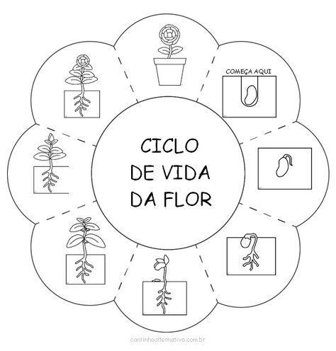 Atividade do Ciclo de Vida da Flor Para Imprimir - Blog Cantinho ...
